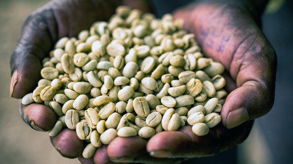 Ethiopia coffee 1400s