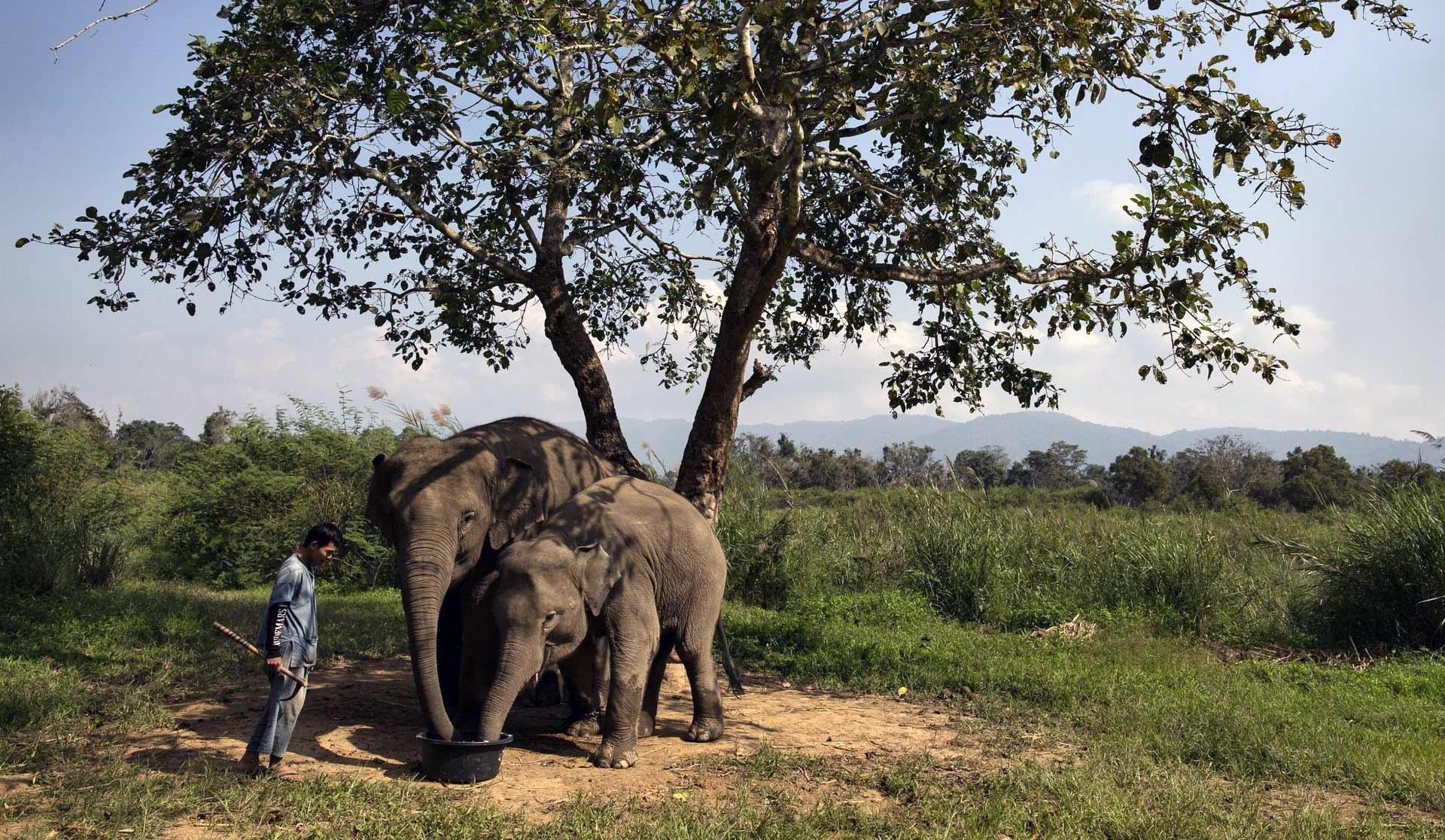 Elephant Dung